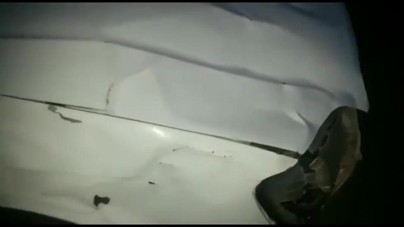Медведь обосрал машину