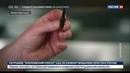 Новости на Россия 24 Николь Кидман отведала живых насекомых на камеру