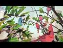 N.A.S.A. Way Down (feat. RZA, Barbie Hatch, John Frusciante) [Prod. by 10Hunna]