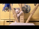 Cats 101 Animal Planet Khao Manee ** High Quality **