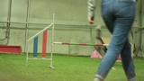 Border collie Runa- training agility