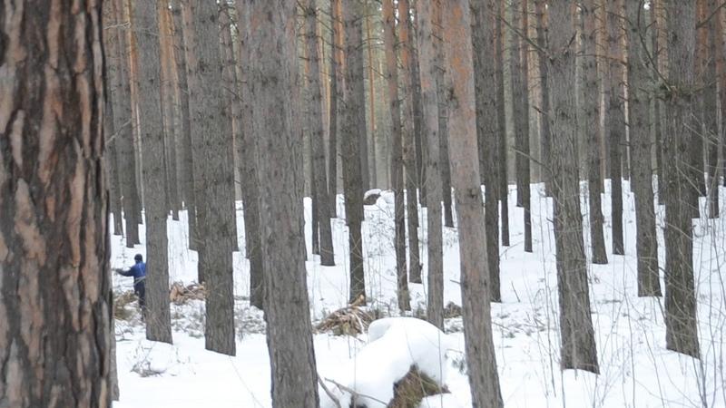 Пилят деревья и жгут костры в лесу Бердска
