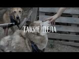 100 собак Дарьи