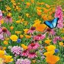 Есть в мире цветы и цветы эти – дети