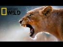 Nat Geo Wild Бойцовский клуб для животных 2017 Avaros