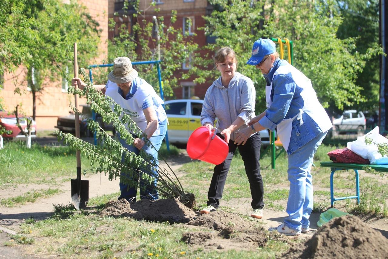 «Зеленая дружина СГК» работает с 2015 года, и за это время общественники посадили 4 тысячи деревьев в Красноярске