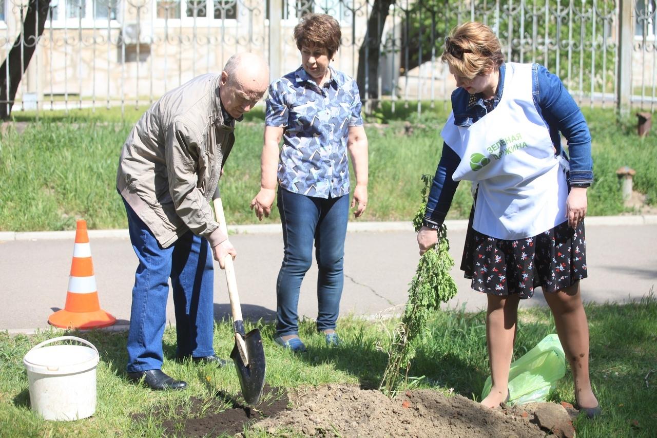 За день активисты совместно с жильцами озеленили два двора на правобережье