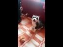 Подарили Отцу собаку