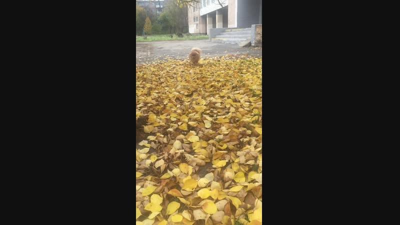 Осень рыжая подружка...