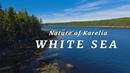 Природа Карелии Белое море 🔹 Nature of Karelia White Sea