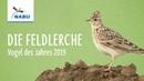 Die Feldlerche - Vogel des Jahres 2019