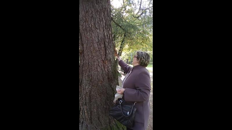 Кормление белочек в Удельном парке