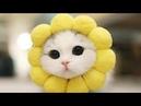 Смешные коты и кошки ТОЛСТЫЕ КОТЫ Приколы с котами до слез – Смешные кошки МатроскинТВ