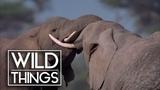 Elephants On The Run Wildlife Documentary Wild Things