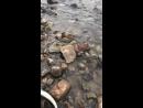 Дал удилище заядлой рыбалке Соне