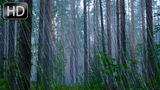 Calm Gentle Rain Sounds 10 Hours No Music. White Nature Noise for stress Relief, Sleep, Soothing