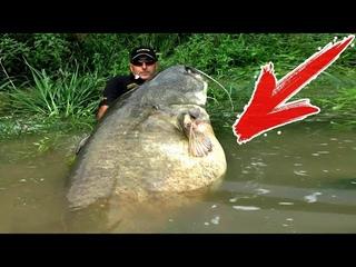 ТОП 10 Самых Больших Рыб из Наших Рек | Аномальные Речные Монстры Пойманные Человеком