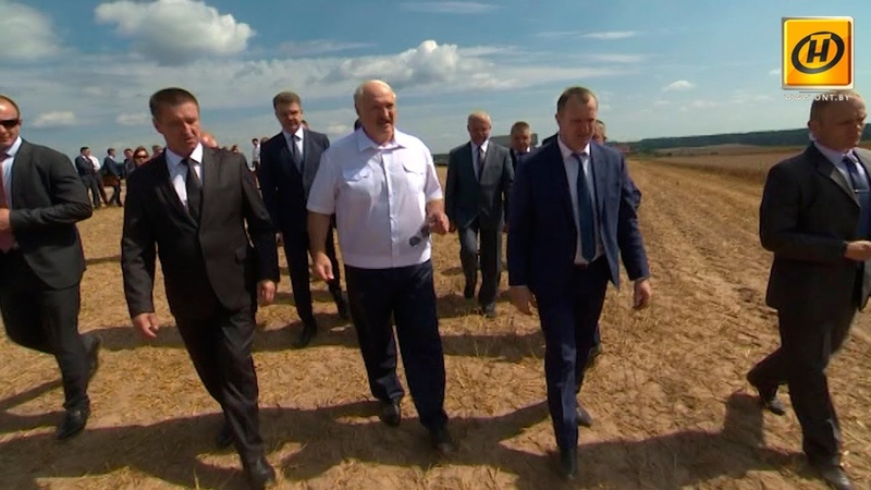 Александр Лукашенко побывал на уборочной кампании в Минской и Витебской областях