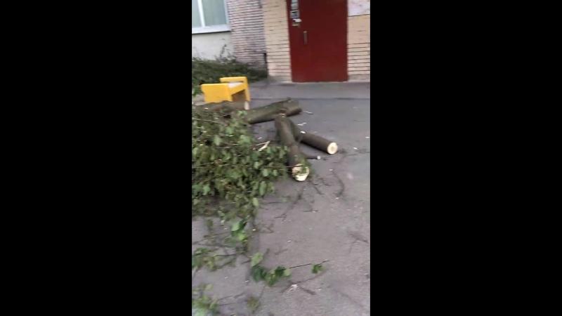 незаконный спил деревьев в Санкт-Петербурге
