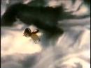 Советские мультфильмы_ Солдатская сказка 1983 сказки Паустовского