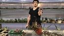 Эчеверия с гигантскими цветоносами Георгий Аристов