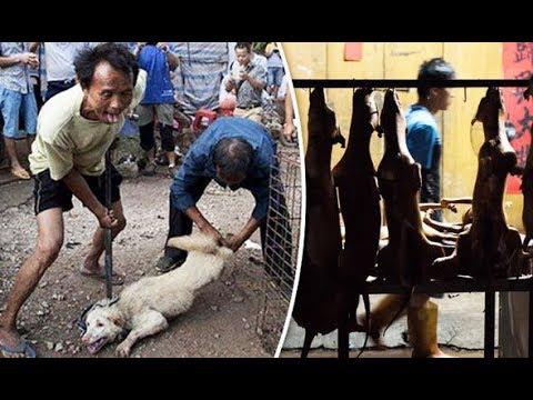 كلاب العيد .ذبح الكلاب على الطريقة الصينية
