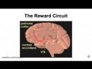 Влияние порнографии на мозг