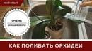 Полив Орхидеи 🌸 Как Поливать 🌸 Тонкости И Секреты 🌸 Что Бы Не Было Проблем И Загнивания