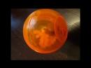Развивающая игрушка Тumbler от Rogz