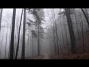 Живые Обои - Через дождливый лес на авто