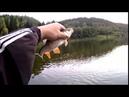 Fishing на искусственные мушки хариуса и голавлей