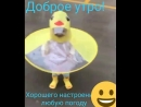 Video-fd29e2387b30028f03bca010d3921190-V.mp4