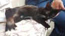 Фильм про Ласку - слепую кошку, постадавшую от живодера