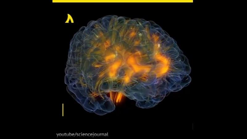 Учёные смогут предсказывать деменцию   АКУЛА