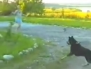 Кошка-миротворец )