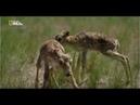 Человек и природа Равнины 5 серия из 5 Full HD 1080p