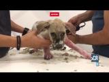 Новая жизнь щенка по кличке Паскаль