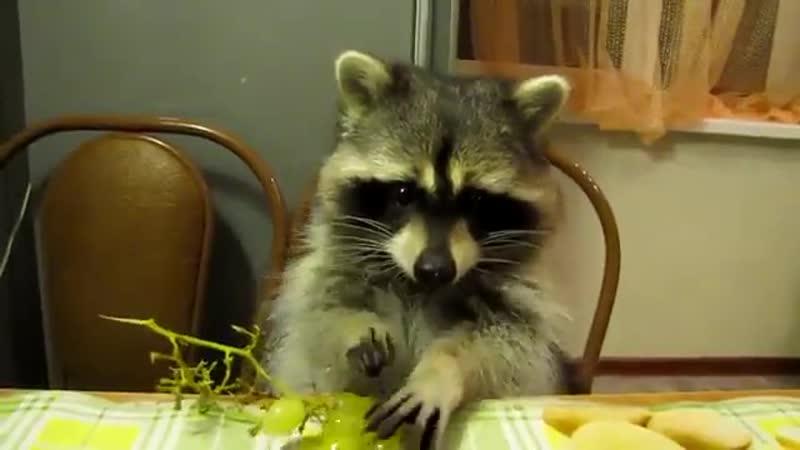Митяй лопает виноград