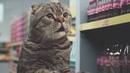 Cat supermarket