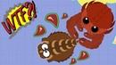 Эволюция животных в Мопио Властители океана в Моуп ио Mope io