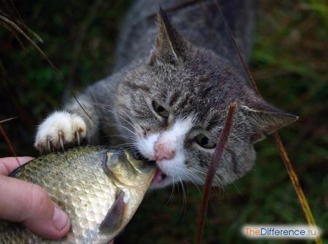 Как понять, что у кошки глисты
