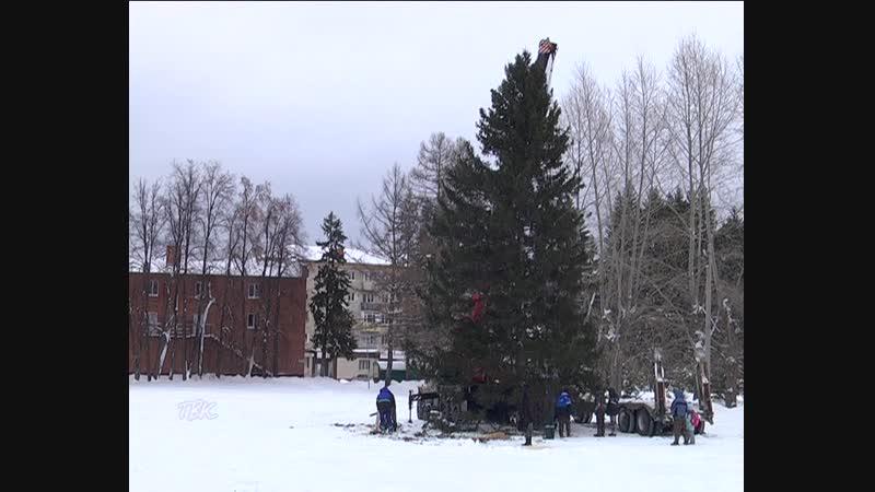 В Колпашеве установили главный символ Нового года - 15-метровую ель