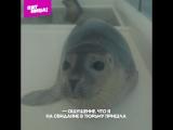 Приют для морских котиков на острове Зеландия