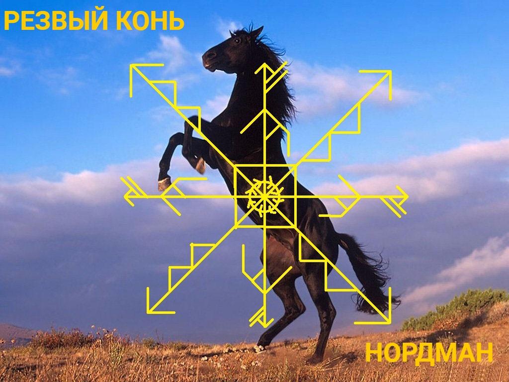 Резвый конь - мощный энергетик WPZy4YqnuEo