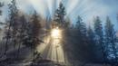 Картинка зима. British Columbia, лес, деревья, утро, зима, Canada.