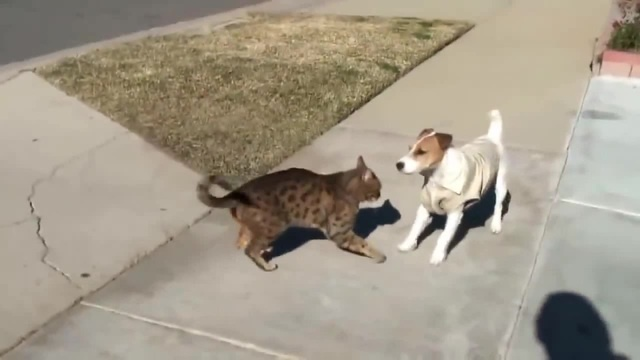 Angry Cats VS Dogs Funny 2018