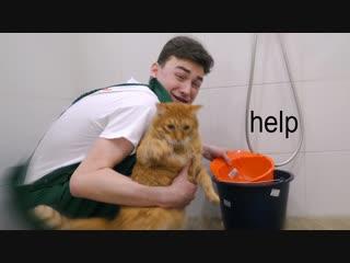 мою своего кота ЧТО-ТО ПОШЛО НЕ ТАК