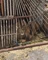 Помощь Животным on Instagram В зверинце сумасшедшего человека в г. Покровск, который решил что он директор Зоопарка, сейчас умирают 6 африканских...