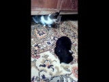video_2018-07-29_09-53-48