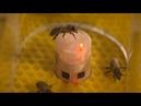 Ρομπότ επικοινωνούν με μέλισσες και ελέγχουν τη